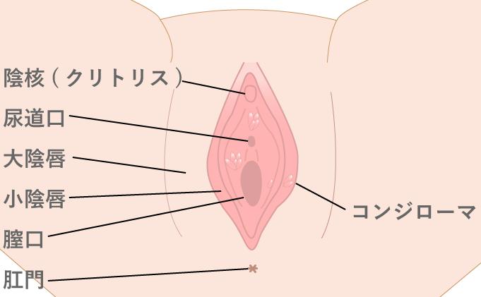 尖圭コンジローマのイラスト画像